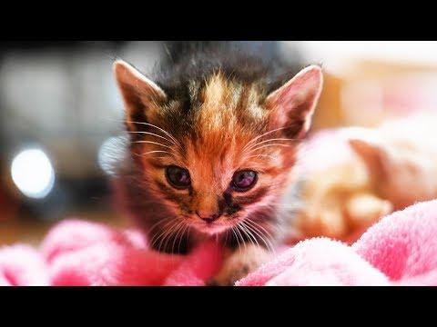 弱っていたところを保護した子猫の三兄妹、22日間の成長記録 保護から巣立ちまで