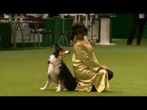 Monika Olsovska Crufts International Canine Freestyle Competition 3rd