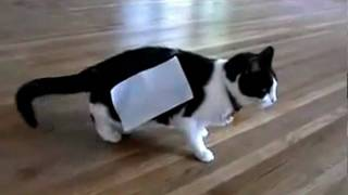 Cat + tape = Experiment