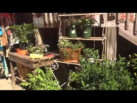 Using Antiques in the Garden | Chifferobe in Black Mountain