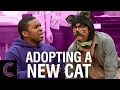 Adopting a New Cat