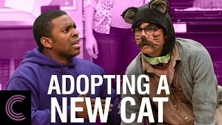 adopting-a-new-cat