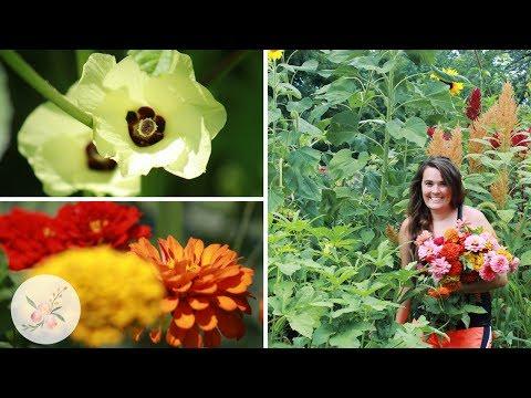 Garden Vlog: End of July Update + Harvest