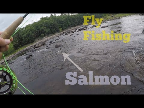 Ep.39. Fly Fishing The Kennebec River For Trout And Salmon.