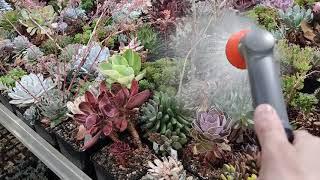 Рассуждаю о выборе группы растений для коллекционирования в процессе полива
