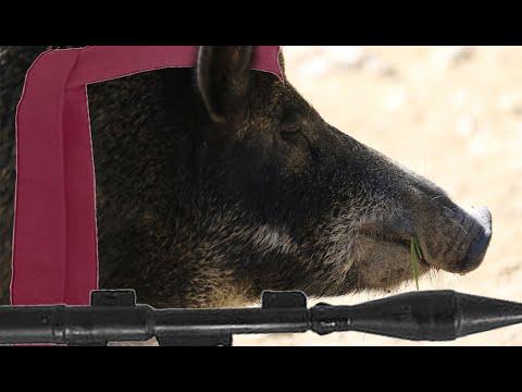 Wie verteidigt man sich bei einem Wildschwein Angriff WIRKLICH? VRMag #3 Snippet