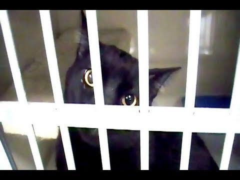 Talking Kitty Cat 19 - Sylvester Goes To Jail