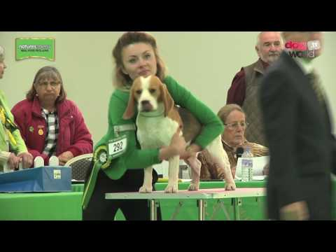 WELKS Championship Dog Show 2017 - Hound group FULL