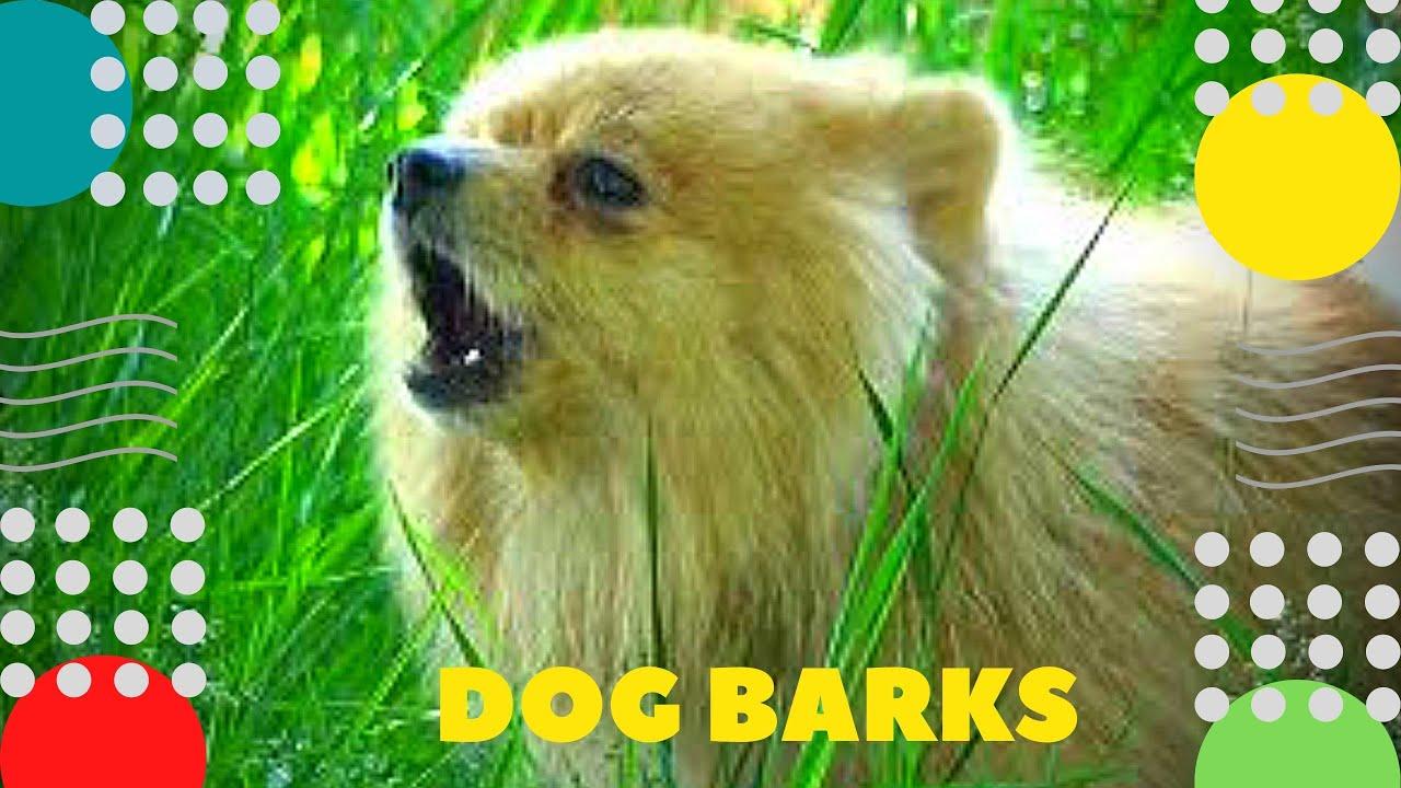 Собака лает Dog barks Программа Голос 4K Hund bellt Le chien aboie El perro ladra الكلب 狗叫 개 짖는 소리 犬