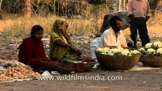 Roadside trading in Uttar Pradesh - Seasonal fruit & vegetable sellers