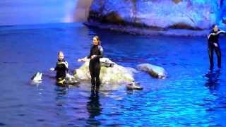 Dolphins @ Shedd Aquarium Chicago 05/02/2014
