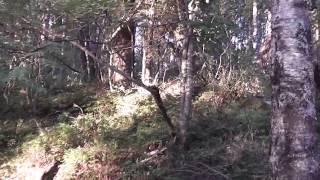 Карелия. Река Сяпся. Раннее утро(Это видео создано с помощью видеоредактора YouTube (http://www.youtube.com/editor), 2014-10-22T07:57:38.000Z)