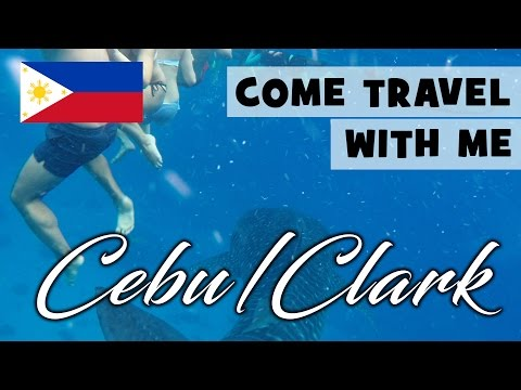 Swimming with sharks | Travel With Me | Cebu Guide