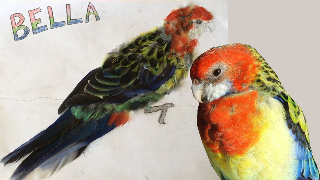 bird art with real feathers youtube