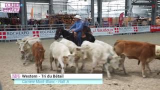 Western Tri du bétail - Equid'Espaces 2016