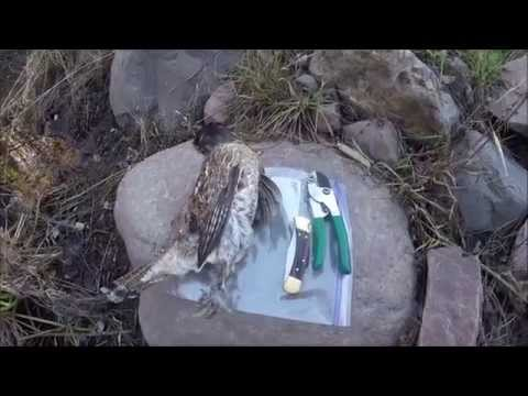 How To Clean A Ruffed Grouse