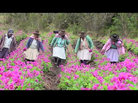 Women Farmers and Andean Seeds: Shaping Futures in Peru