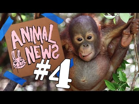 ANIMAL NEWS NETWORK #4