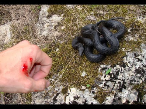 How to Treat Snake Bites in the Wilderness