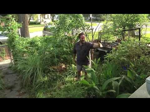 Permaculture Paradise:  Alex Ojeda's Permaculture Update!