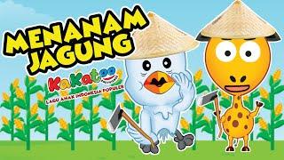 Menanam Jagung | Cangkul-Cangkul | Kakatoo