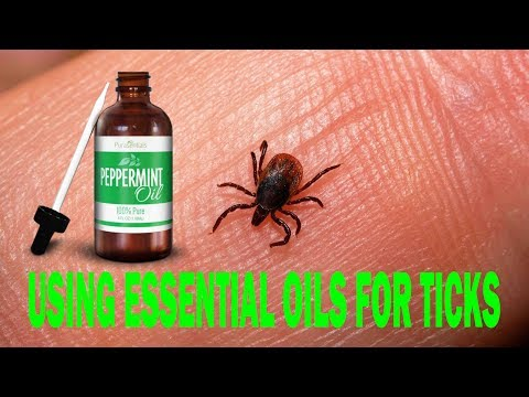 using-essential-oils-for-ticks