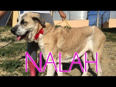 Adoptada nalah protectora de animales m laga youtube for Protectora de animales malaga ciudad jardin