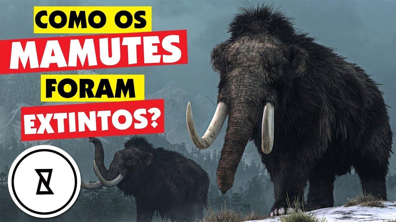 Como Os Mamutes Foram Extintos   Curioso Demais