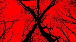 Blair Witch | Trailer