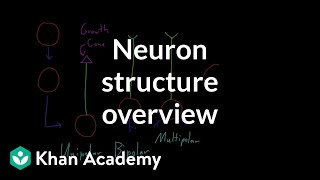 Overview of neuron structure