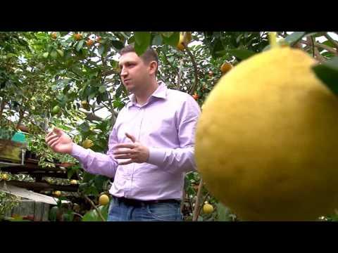Саратовский лимонарий планируют сделать центром притяжения туристов