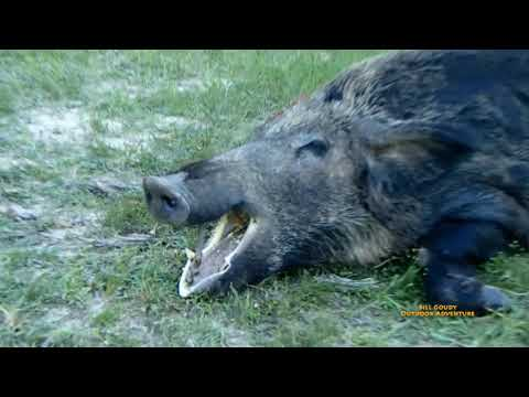 Hog Hunting East Texas - Bringing Home The Bacon