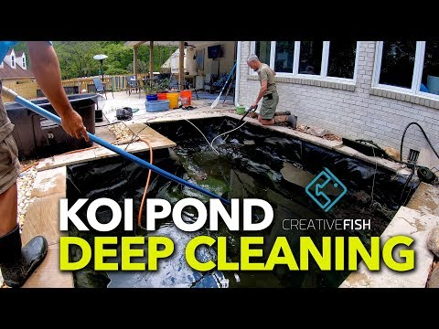 Koi Pond Spring Deep Cleaning