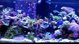 conix67 s 75g mixed reef tank tour