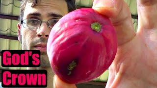 Video God's Crown Review (Mahkota Dewa) - Weird Fruit Explorer Ep. 162 download MP3, 3GP, MP4, WEBM, AVI, FLV September 2018