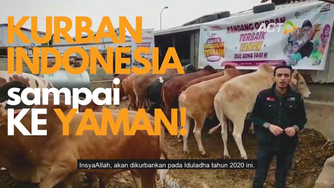 Allahuakbar! KURBAN INDONESIA sampai ke NEGERI YAMAN!