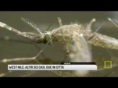 TG PADOVA (07/08/2018) - WEST NILE: ALTRI SEI CASI, DUE IN CITTA'