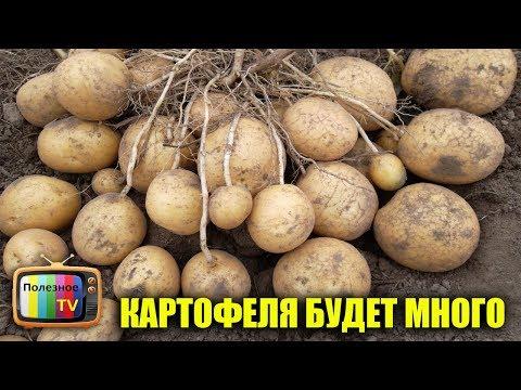 ТОЛЬКО ПРИ ТАКОЙ ПОСАДКЕ КАРТОФЕЛЯ БУДЕТ В 10 РАЗ БОЛЬШЕ! СУПЕР СПОСОБ | картофеля | картофель | вырастить | посадить | полезное | урожай | ранний | семян | обзор | карт