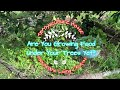 - Permaculture Fruit Tree Guild - Growing Food Under Tree - What Why How
