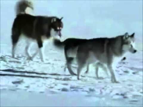 فيديو يستحق المشاهدة مصطفى كامل ماتت حبيبتي.mp4