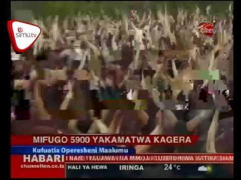 Mifugo 5900 Yakamatwa Kagera