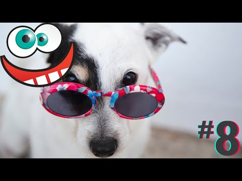 Funny animals compilation cats and dogs fails videos fun moments #8