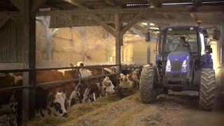 Pierre, Agent polyvalent en élevage laitier