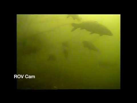 Underwater Carp Fishing - ROV Tests - Winter Carp in Snags - Underwater Fishing Camera