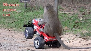 Best funny videos monkey flying car - The intelligent monkeys playing RC Truck