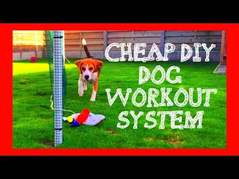 Cheap And Fun Do It Yourself Dog Workout System