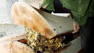 """Mẹ già 80 tuổi mua sẵn quan tài, con trai vừa mở nắp 1 triệu con ong bay ra quây kín: """"Giàu to rồi!"""""""