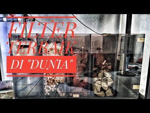 Cara kerja sump filter Aquarium #sumpfilter