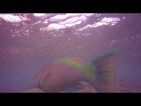 OAHU, HAWAII - Spearfishing Yokohama Bay - Dec 2015