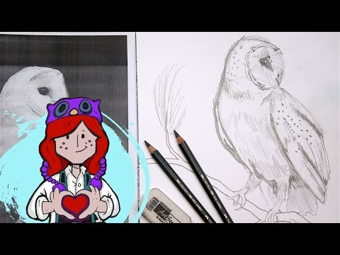 Tagged Easy Barn Owl Drawing The Art Sherpa